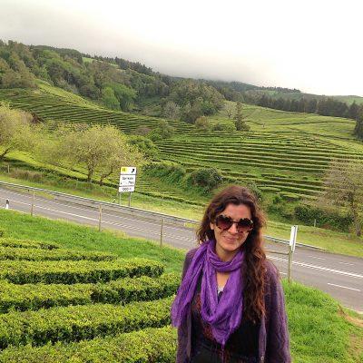 Açores – plantações de chá de encantar